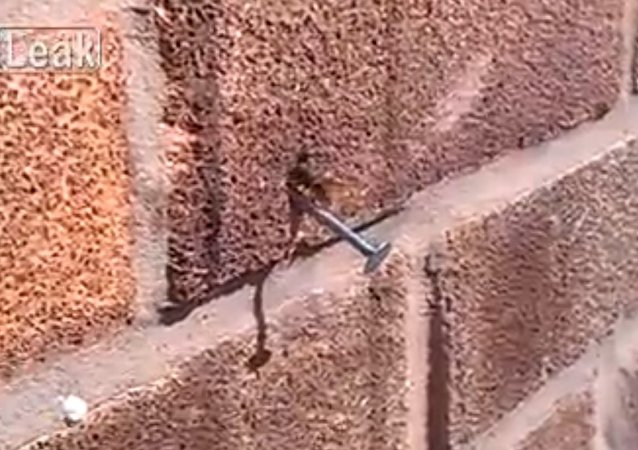 Bee pulls nail from wall