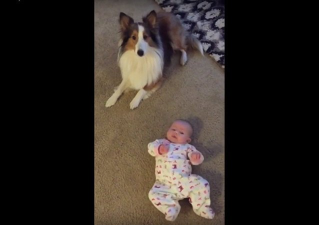 Dog teaches baby how to roll over