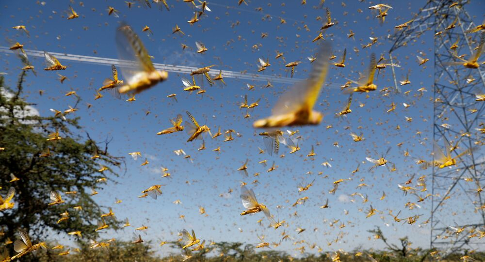A swarm of desert locusts flies over a ranch near the town of Nanyuki in Laikipia county, Kenya, February 21, 2020. Picture taken February 21, 2020